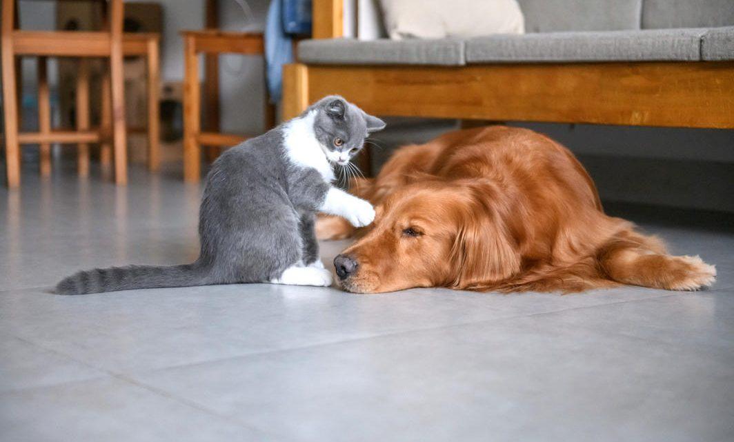 Dommage occasionné par un chien : que faire ?